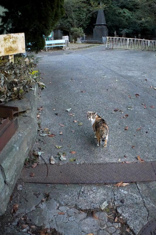 園内に入った三毛猫2