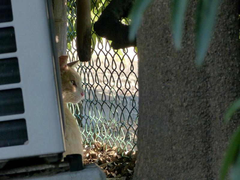 金網と猫3