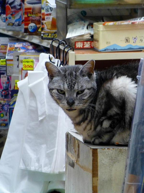 おもちゃ屋の猫
