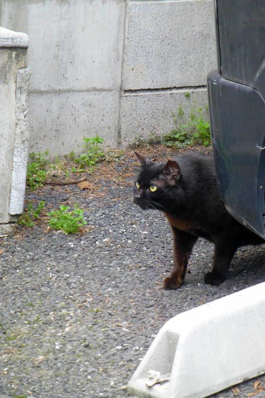 黒い車と黒猫1