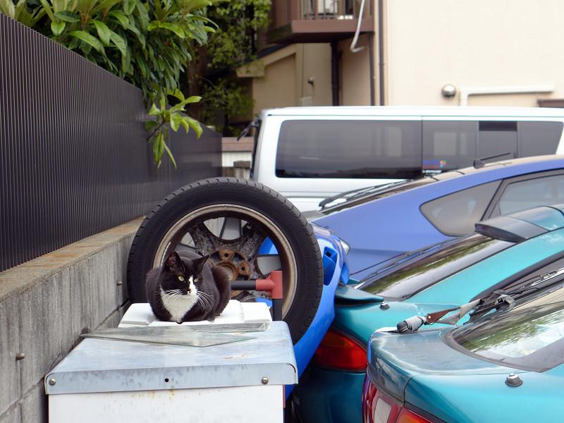 駐車場のタイヤと黒白猫1