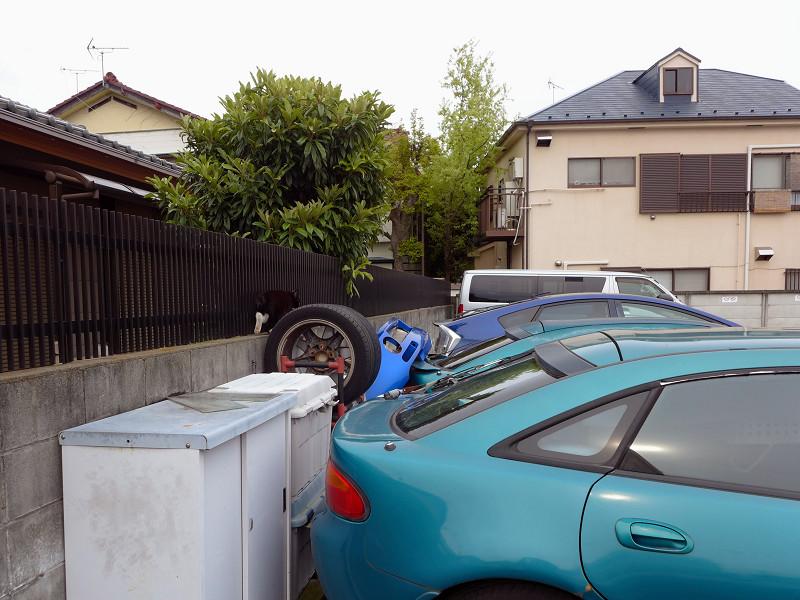 駐車場のタイヤと黒白猫2
