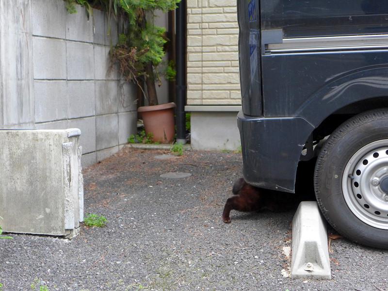 黒い車と黒猫2