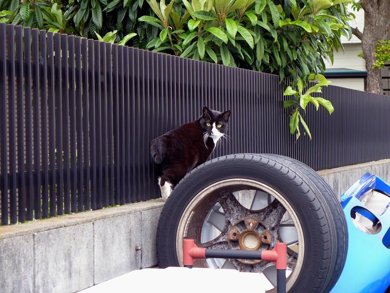 駐車場のタイヤと黒白猫3