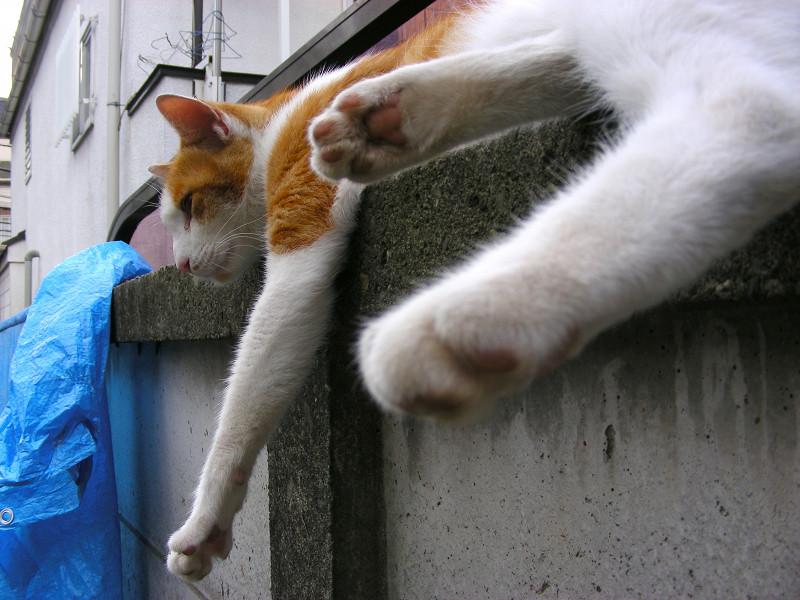リラックス中の茶白猫1