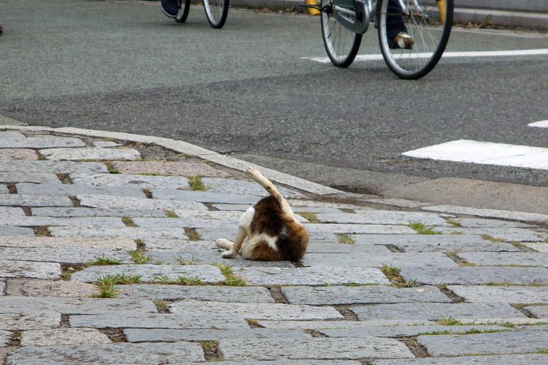 石畳とキジ白猫1