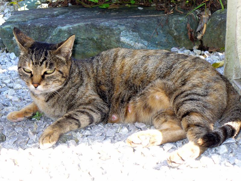 ベンチの下のキジトラ猫たち2