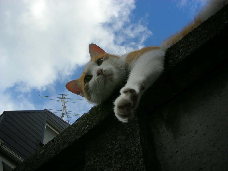 リラックス中の茶白猫3