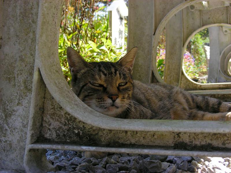 ベンチの下のキジトラ猫たち4