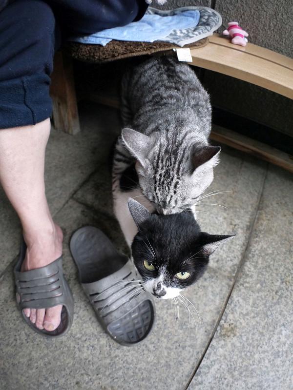 じゃれている猫たち1