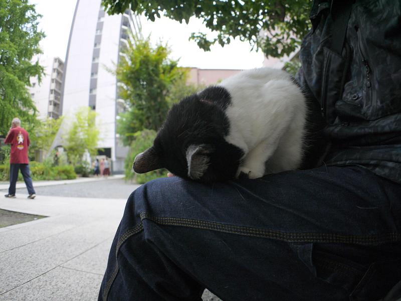 ゴメン寝してる白黒猫1