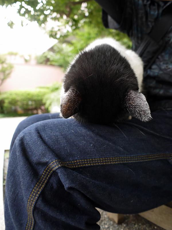 ゴメン寝してる白黒猫2