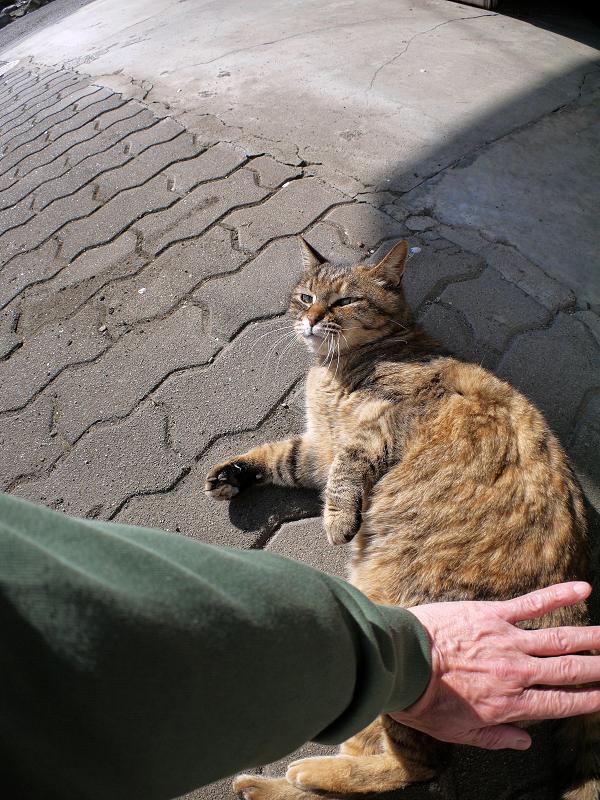 タイルとキジトラ猫1