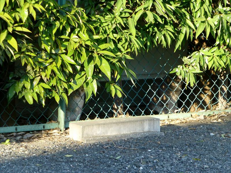 金網の向こうの猫たち1