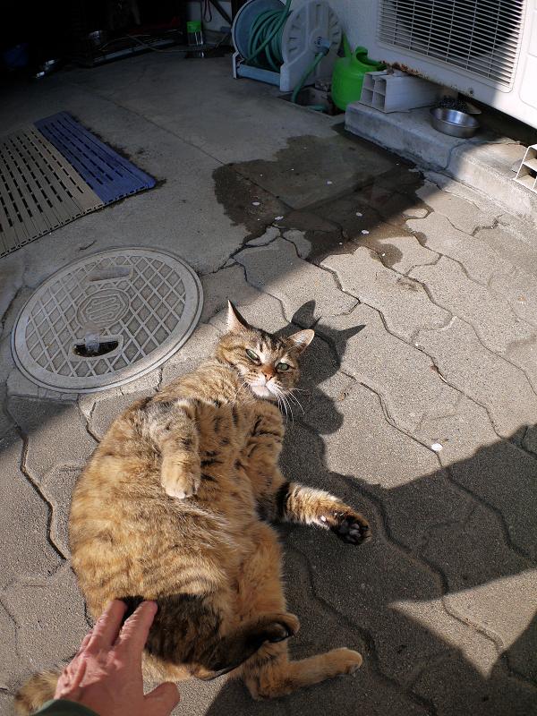 タイルとキジトラ猫2
