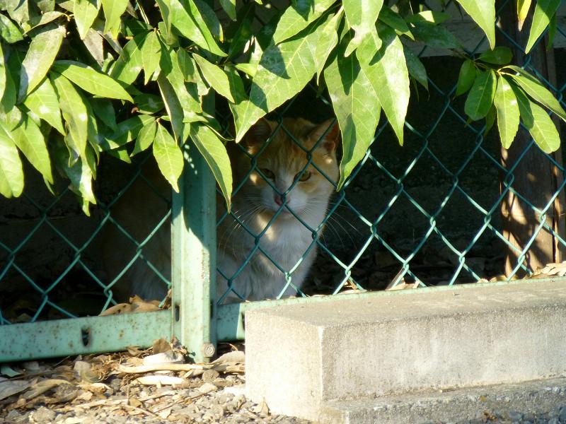 金網の向こうの猫たち2
