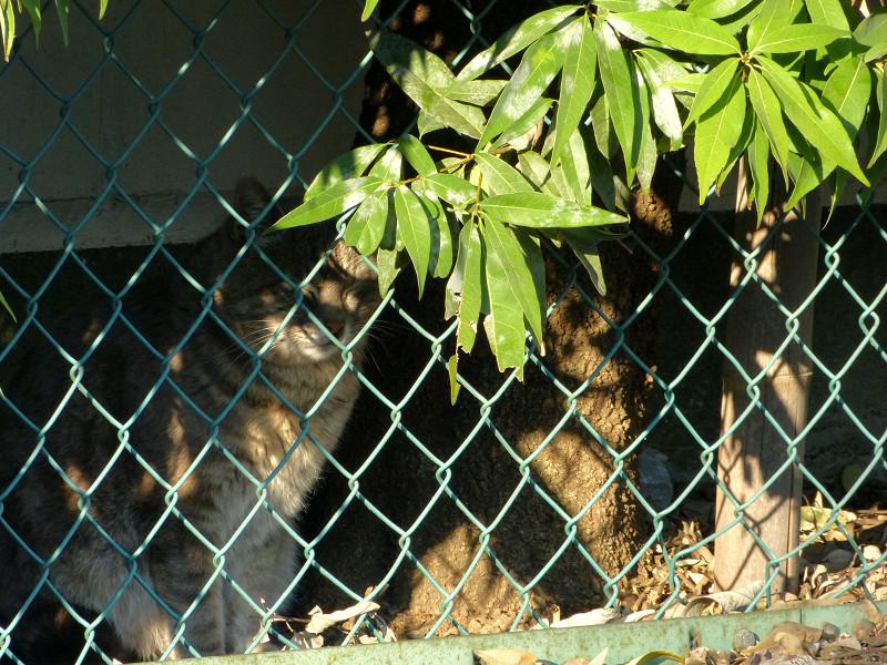 金網の向こうの猫たち3
