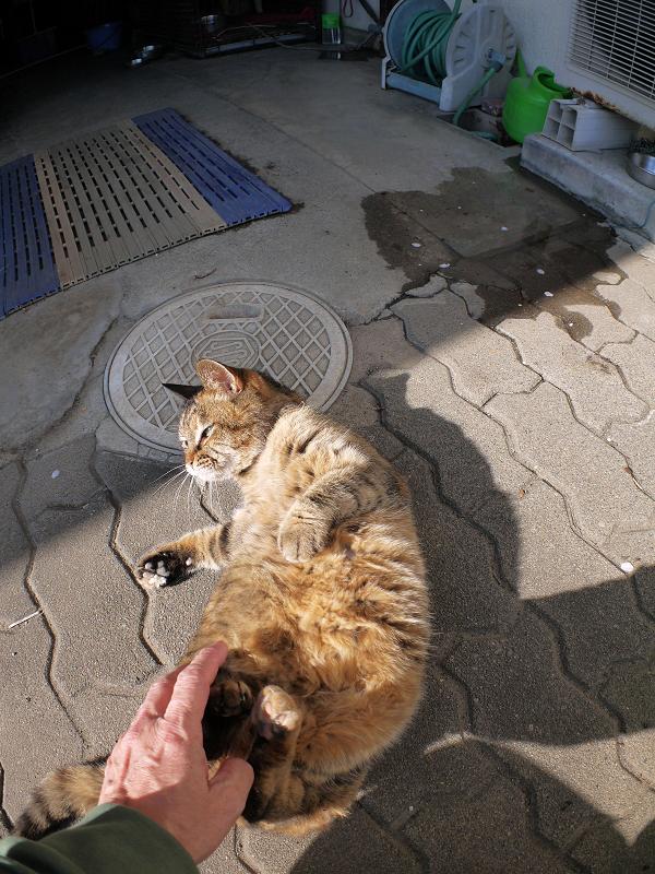 タイルとキジトラ猫3