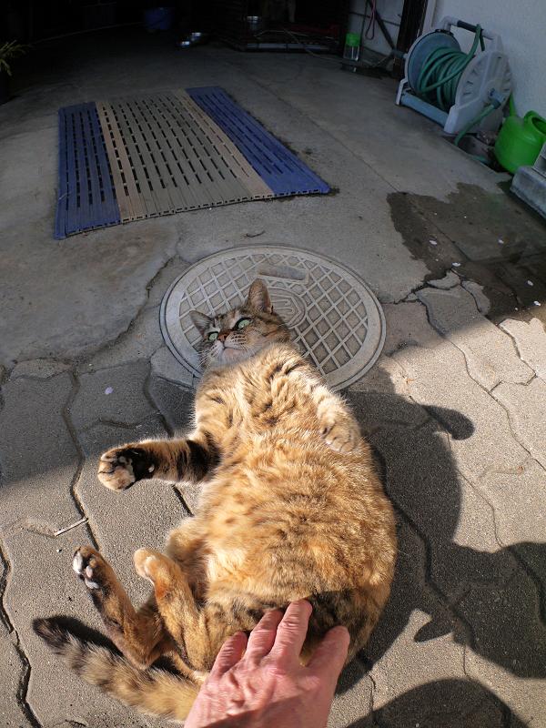 タイルとキジトラ猫4