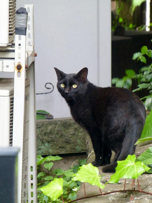 奥へ歩いて行く黒猫2