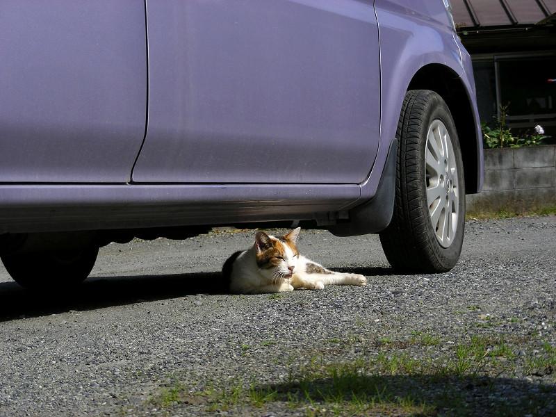 軽自動車と三毛猫1