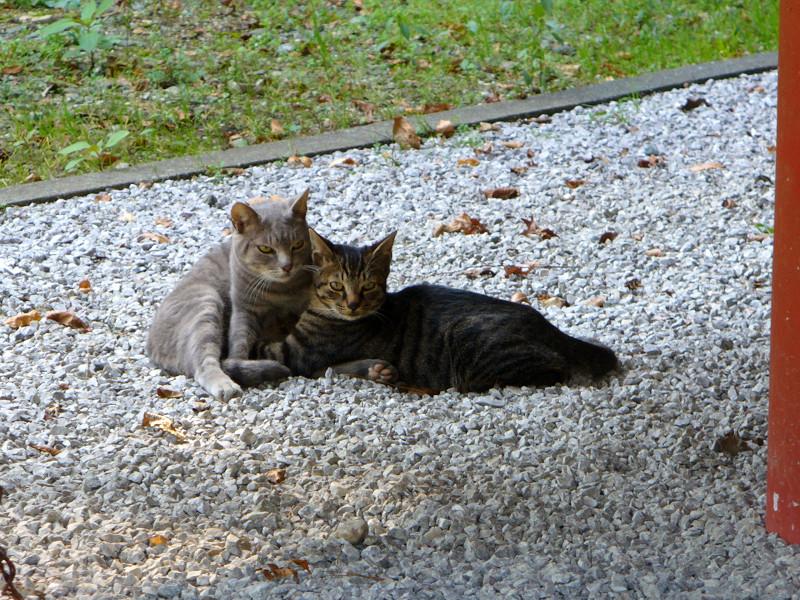 境内の母子猫1