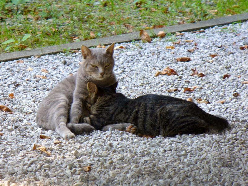 境内の母子猫2