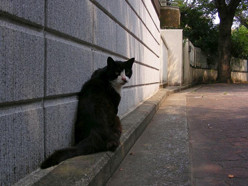 ブロック塀前にいた黒白猫3