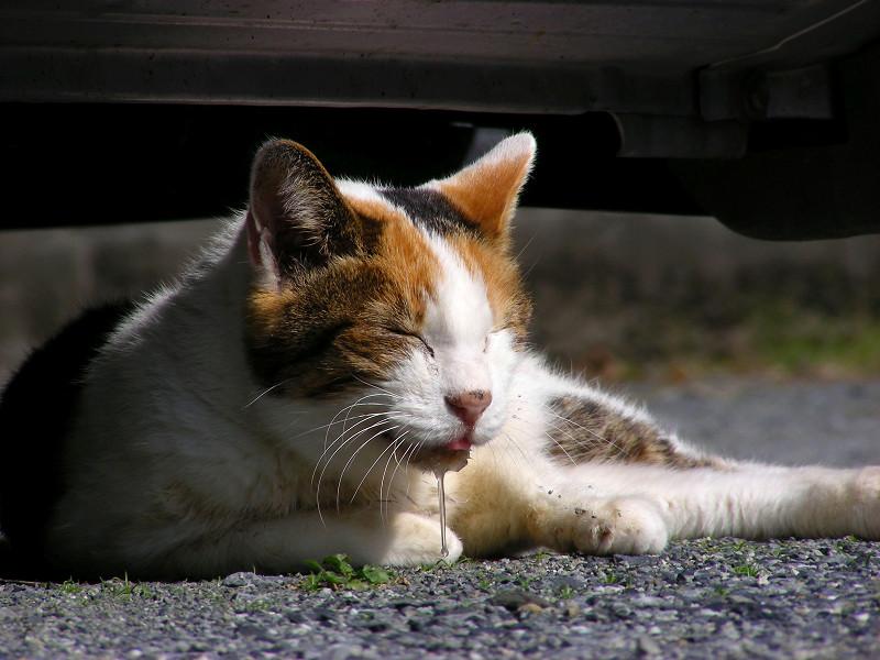 軽自動車と三毛猫3