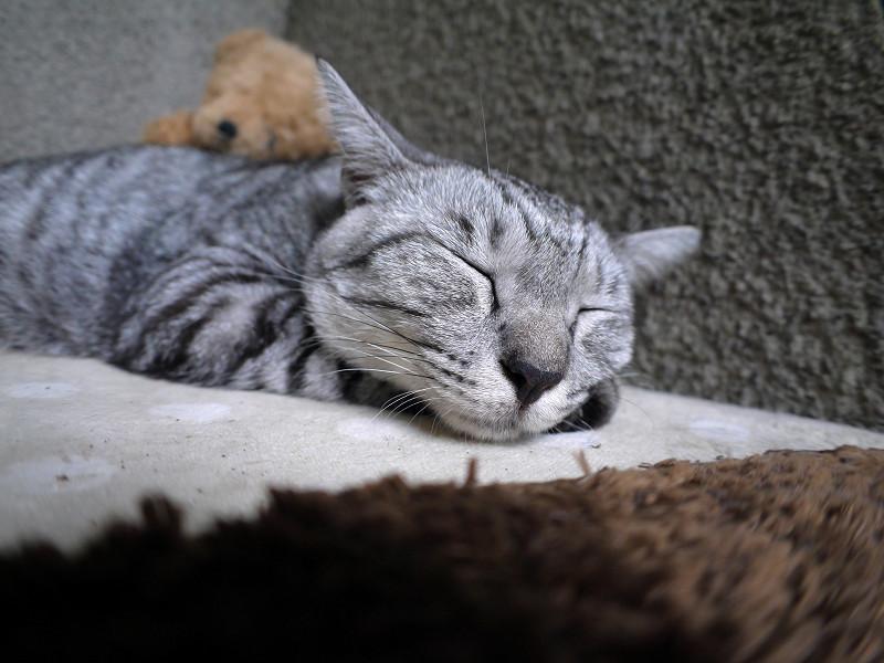 埋まるように寝てるサバトラ猫1