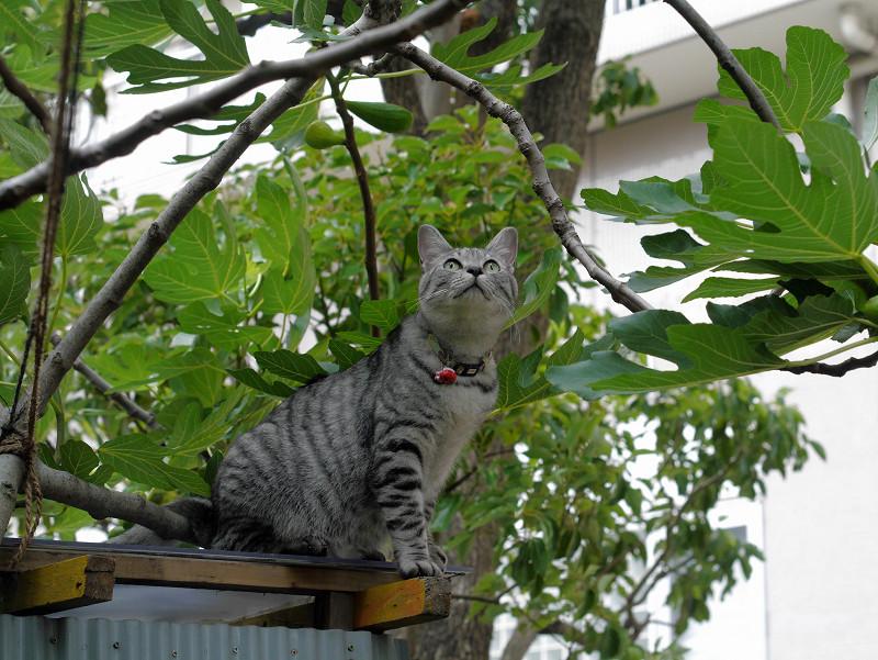 屋根の登ったサバトラ猫2