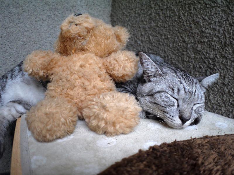 埋まるように寝てるサバトラ猫2