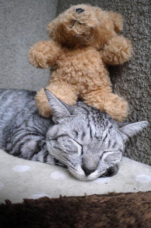 埋まるように寝てるサバトラ猫3