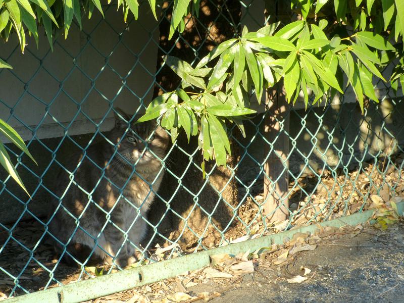 金網の向こう側の猫1