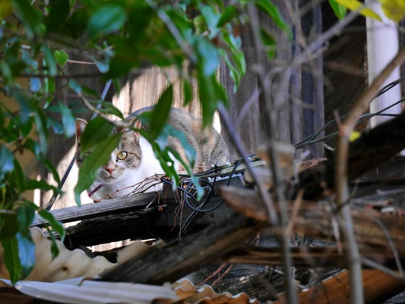 立ち去って行く空き地の茶トラ猫1