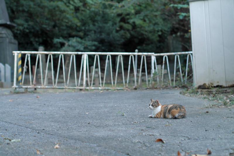 苑内で座った三毛猫2
