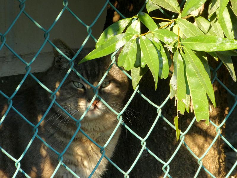 金網の向こう側の猫2