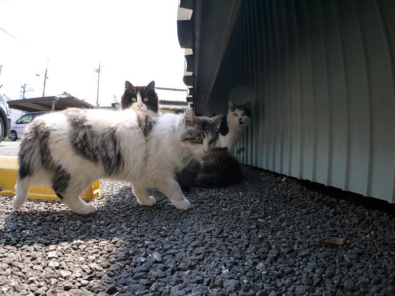 青空駐車場の猫たち2