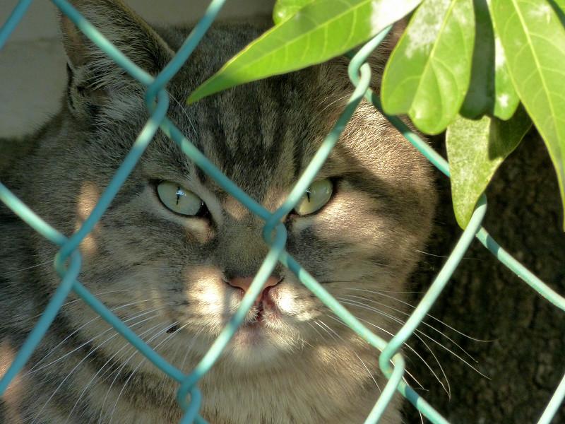 金網の向こう側の猫3