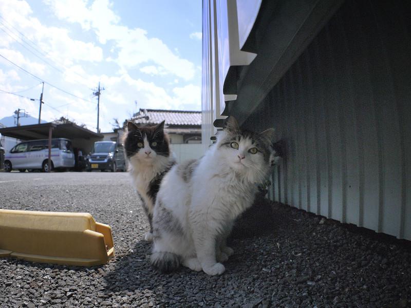 青空駐車場の猫たち4