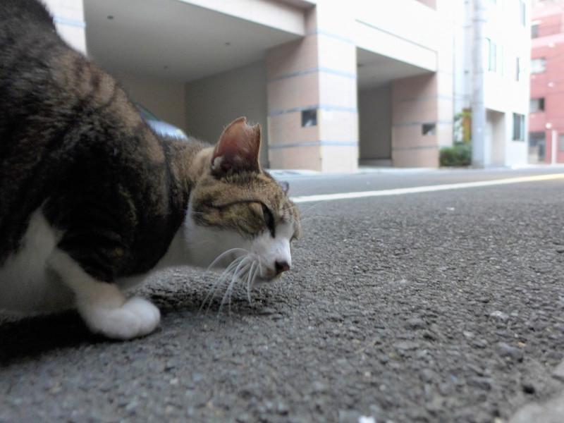 裏通りのキジ白猫