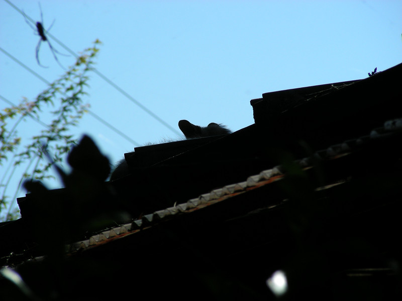 屋根の上の猫1