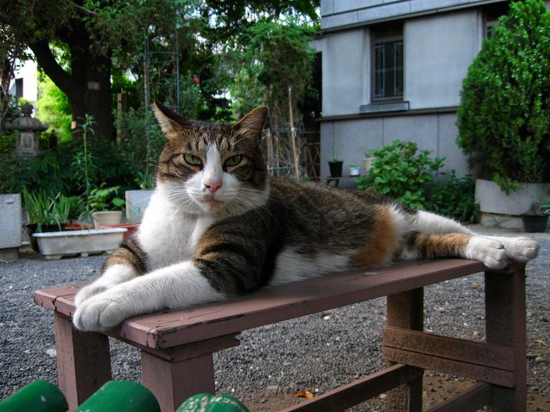 ベンチに乗ってるキジ白猫2