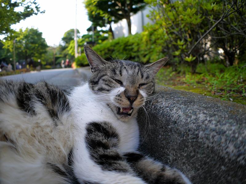 縁石とキジ白猫2