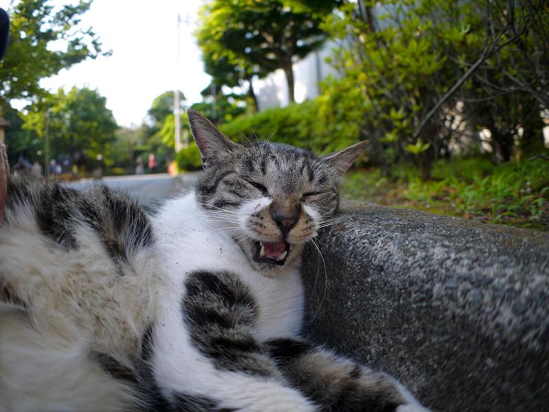 縁石とキジ白猫3