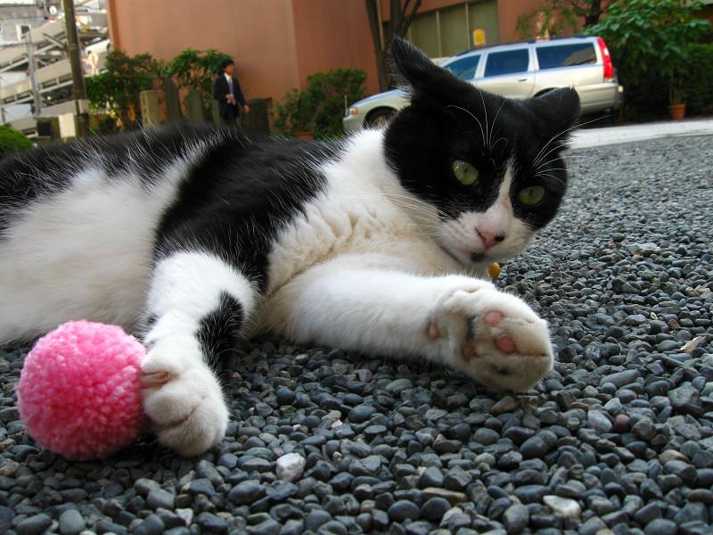 境内で横たわる黒白猫2