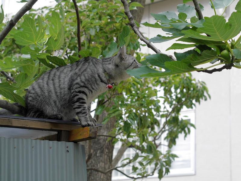屋根の上で見渡すサバトラ猫2