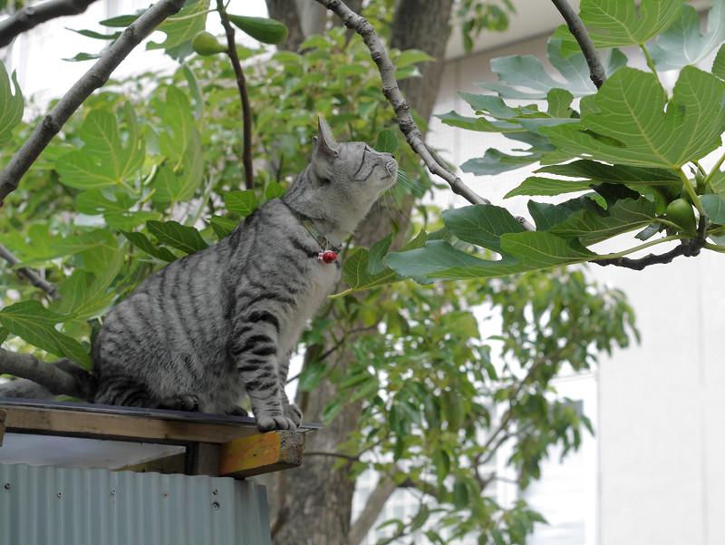 屋根の上で見渡すサバトラ猫3