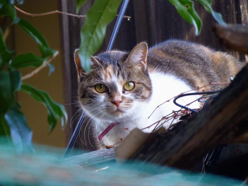 廃屋から見ている三毛猫1