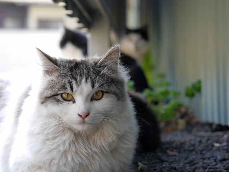 猫遠近法1
